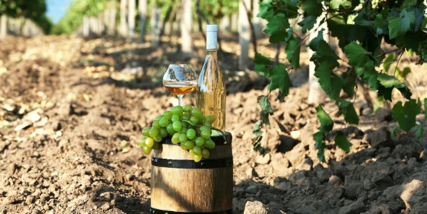 12814_88_wine_in_vineyard-848x425