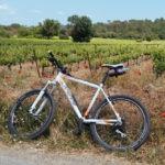 Poppies and vineyards all around Bastide Avellanne