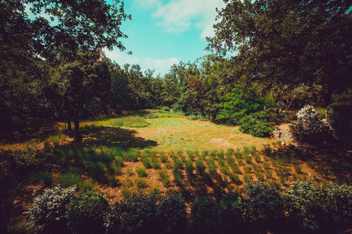 Lavender Garden Provence