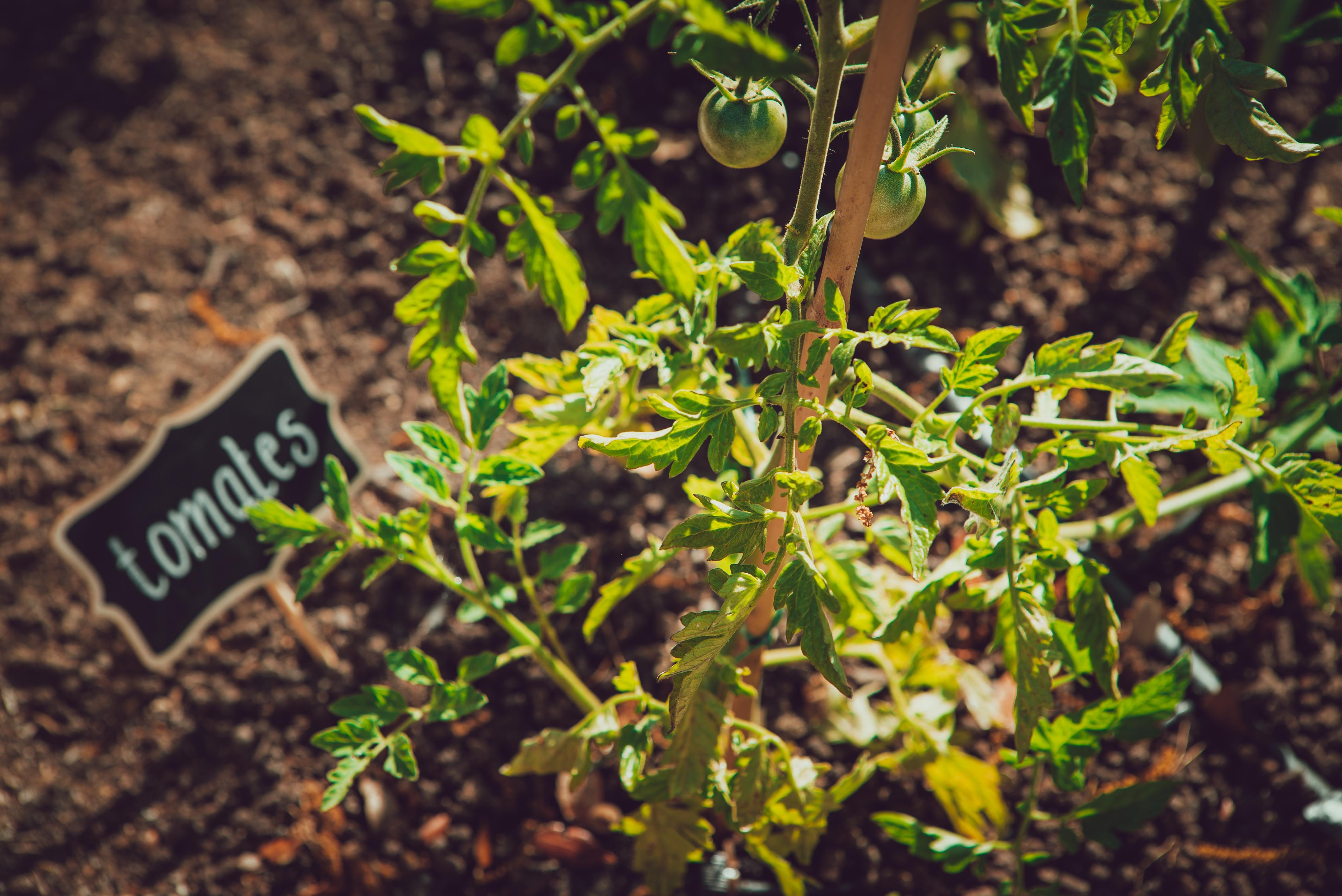 Jardin Provence Bastide Avellanne