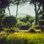 Discover Provence